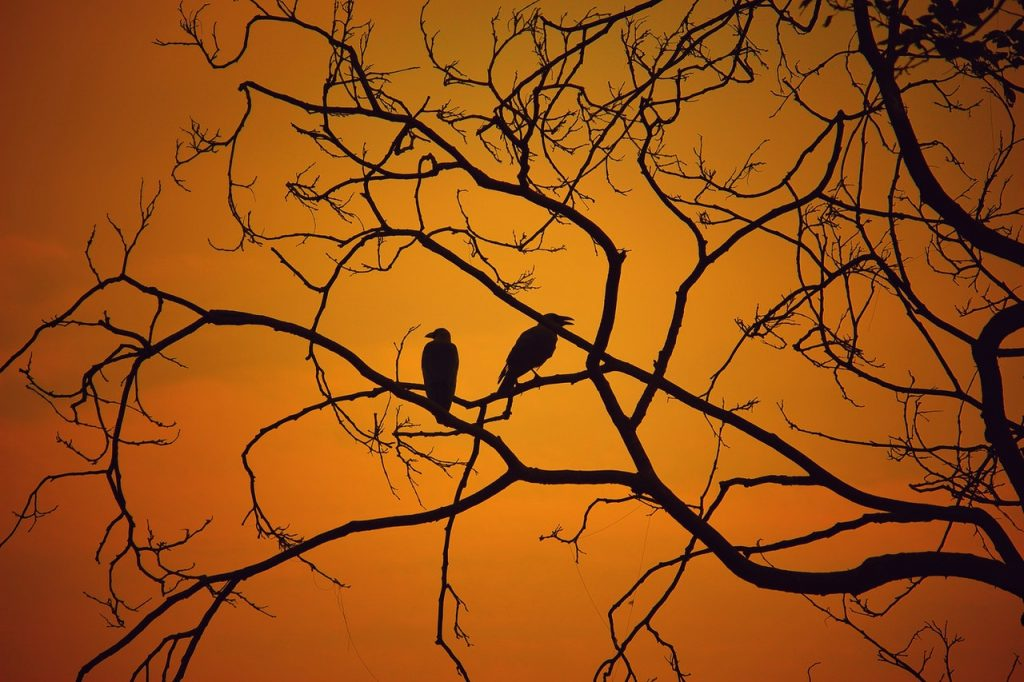 backlit-birds-branches-dawn-609537
